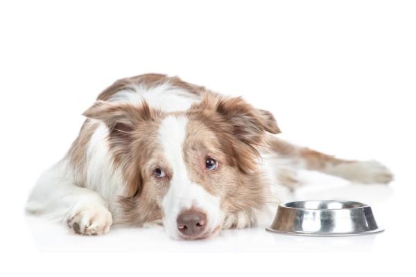 愛犬の食欲がない!ご飯を食べない3つの原因と対処法とは