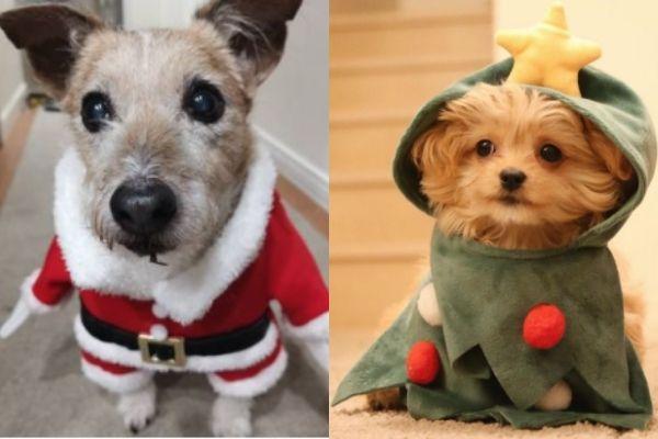 サンタ!ツリー!今年は何する…?【愛犬に着せたいクリスマスのコスプレまとめ】