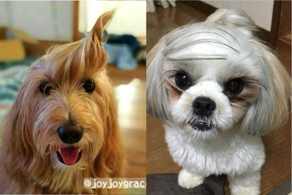 個性が大爆発!思わず笑っちゃう斬新な犬のヘアスタイル8連発