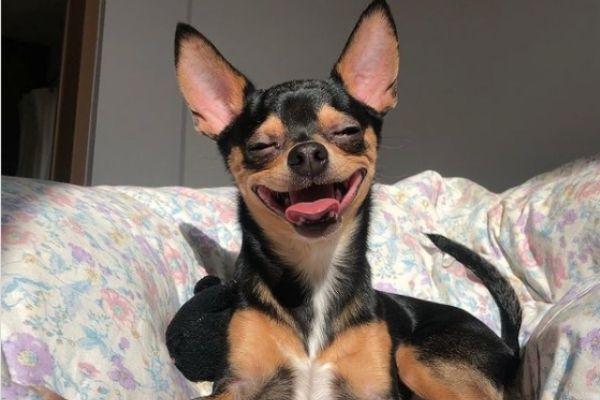 あはは!ふひひ!笑う門には福来る!初笑いにぴったりの笑う犬5連発