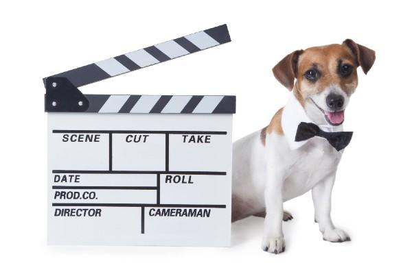 【愛犬家276人が選ぶ!犬映画ランキングTOP43】感動作からコメディまでおすすめ全94作品