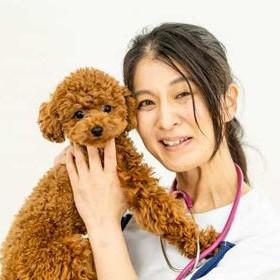 獣医師の画像