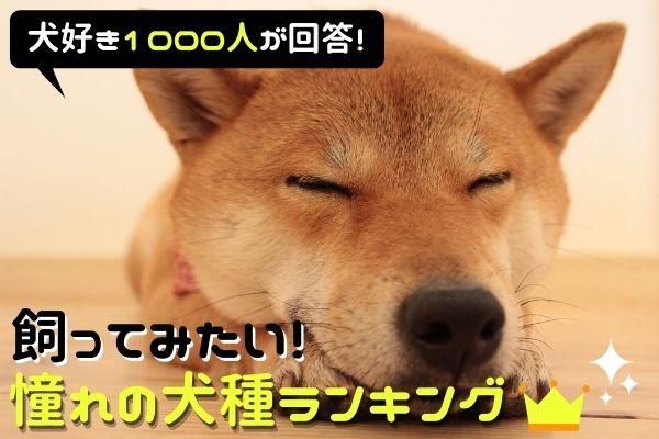 飼ってみたい憧れの犬種ランキング1位は…?飼えない理由もリアルに紹介【犬好き1000人にアンケート】