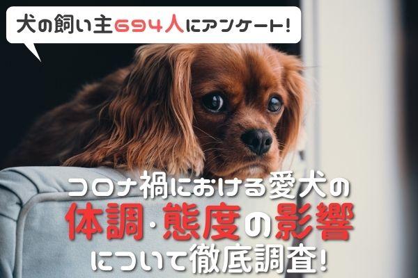 吠えるようになった?甘えん坊になった?コロナ自粛が与える愛犬への影響を調査【飼い主694人アンケート】