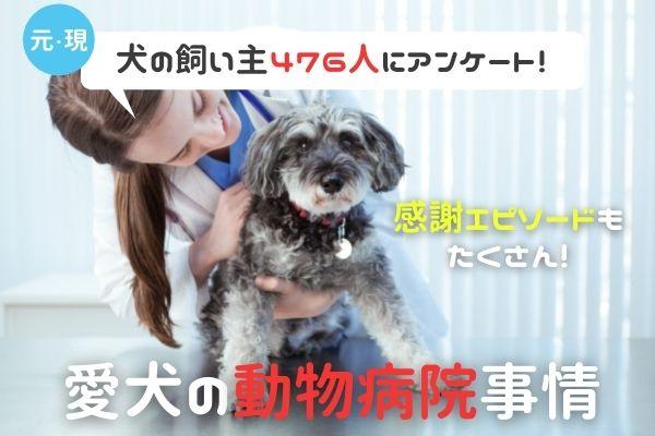 犬のリアルな動物病院事情!利用頻度は?医療ミスやトラブルはある?【現・元飼い主476人アンケート】