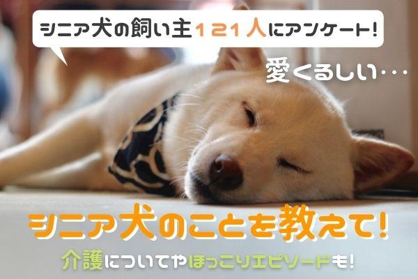 シニア犬は愛らしい!介護で大変なことやシニアになる前にやりたかったことは…?【現・元飼い主121人アンケート】