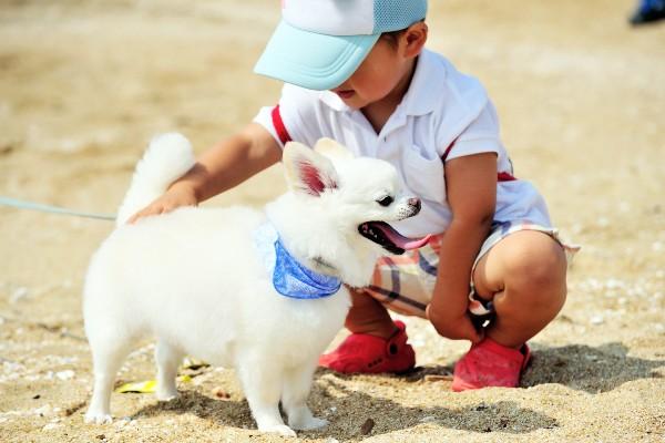 愛犬がレスキュー隊員になった話。「泣いている子供を見つけて…」【観光地での感動エピソードまとめ】