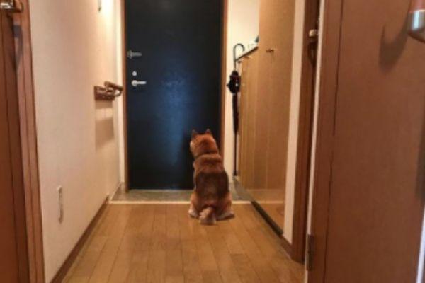 うんうん、早く帰るからね!‼︎愛おしすぎる忠犬の姿に涙…忠犬5選【共感度120%】