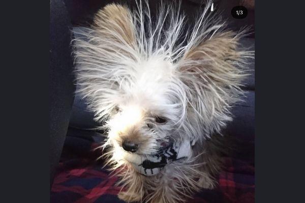「え…どうしたの…?」振り返ったら電撃ネットワーク…静電気ビリビリ蓄電中わんちゃんに爆笑の嵐!