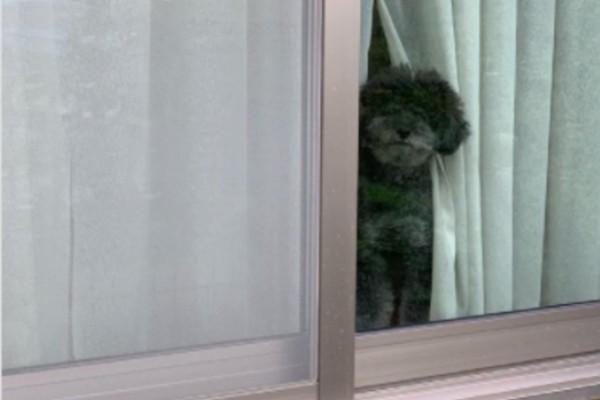(ウルウル…)「ママ、早く帰ってきてね…涙」お出かけをやめたくなりそうでやばい!お見送り犬4選