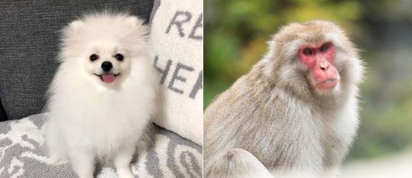 さるに似ている犬