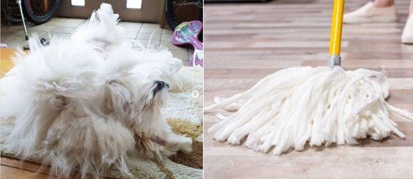 モップに似ている犬