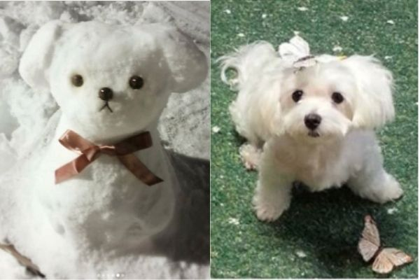 雪が降ったら作りたい!わんちゃんそっくりの雪だるま犬が「かわいい!」と話題に…!