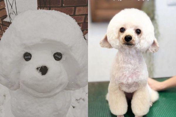 トイプーの雪だるま