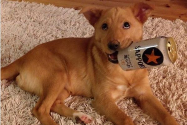 ぷは~飲んだ飲んだ!酔ってないのにベロベロと話題に!可愛すぎる酔っ払い犬6選