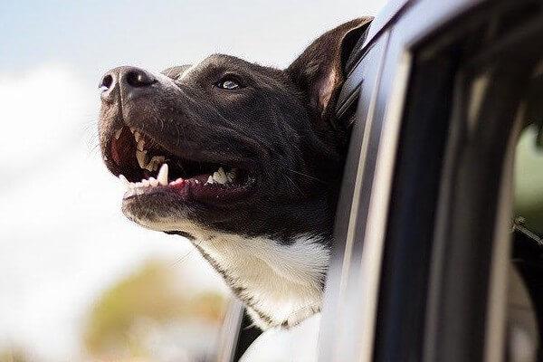 犬ドライブ