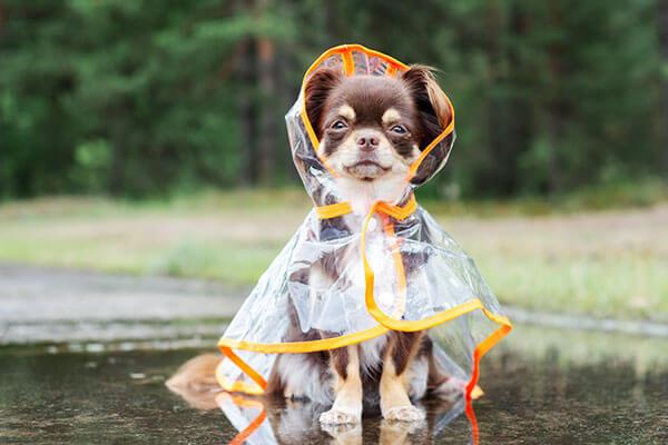 犬用レインコート人気おすすめ10選|小型~大型犬に合うサイズを紹介