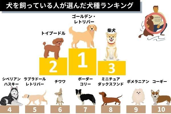 犬を飼っている人が選んだ犬種ランキング