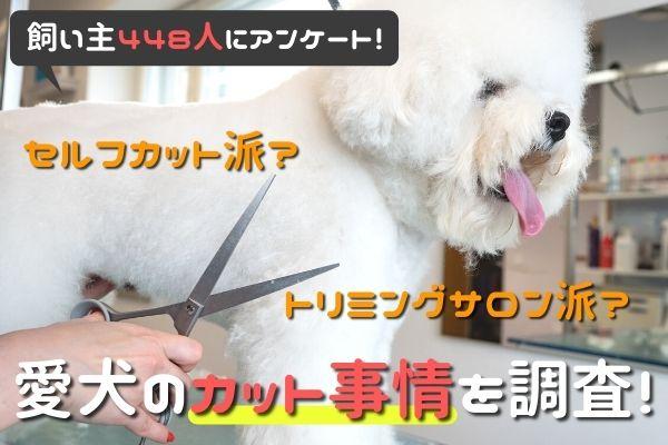 「セルフカット派?トリミングサロン派?」愛犬のカット事情について飼い主448人にアンケート!