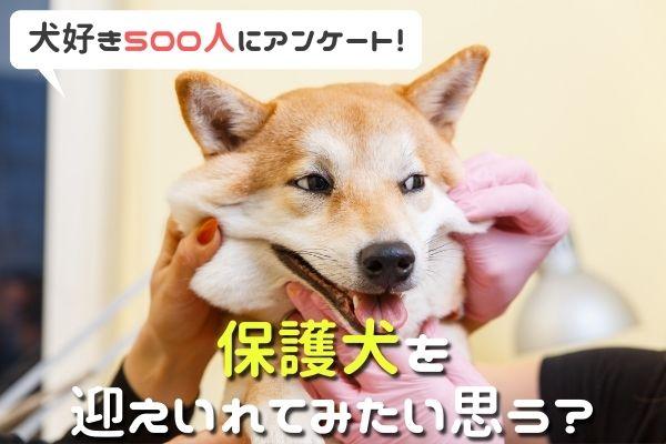 保護犬を迎え入れてみたい人は60%以上!知ったきっかけや迎える時の不安など徹底調査