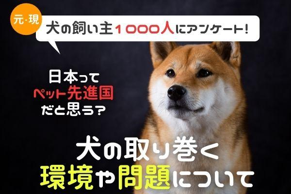 日本は犬に優しい国?殺処分をどう思う?犬の現状について考える!【犬の現・元飼い主さん1000人アンケート】