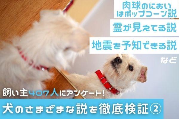 霊が見える?地震を予知する?肉球はポップコーンの匂い?犬にまつわるさまざまな説を検証してみた②【飼い主407人アンケート】