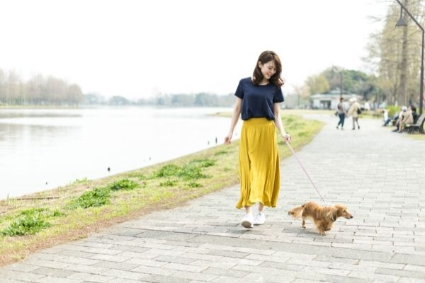 犬と散歩している女性