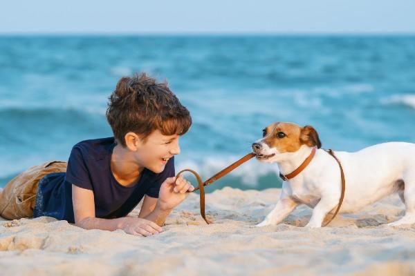 外国語のおしゃれな犬の名前【2020年最新】海外のトレンドや人気ランキングを調査!