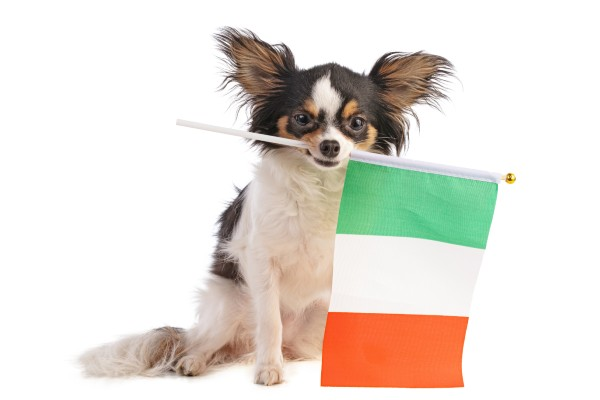 イタリアの国旗を持った犬