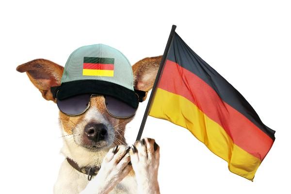 ドイツの国旗を持った犬
