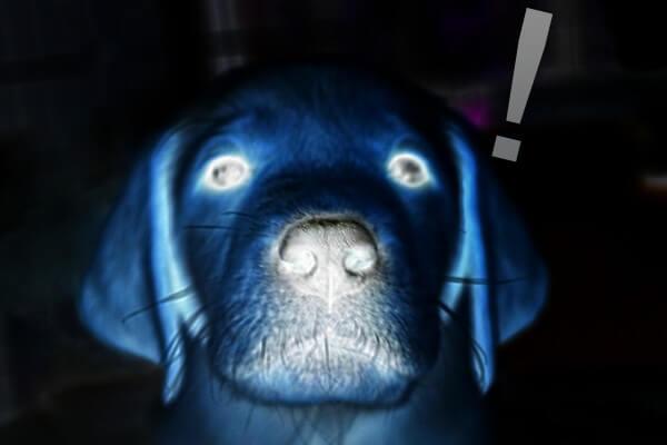 青ざめる犬
