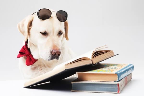 勉強するラブラドール