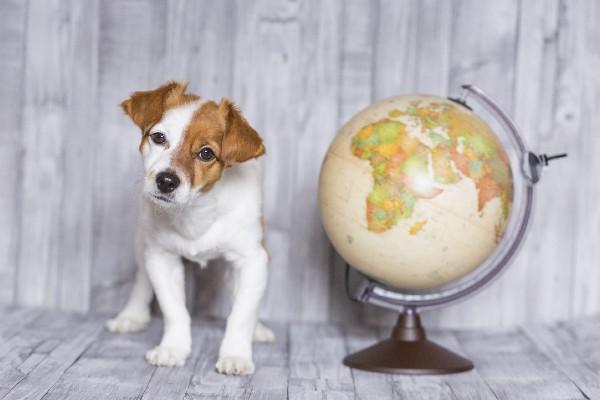 地球儀の横にいる犬