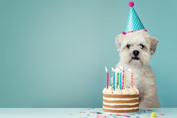 犬と誕生日ケーキ