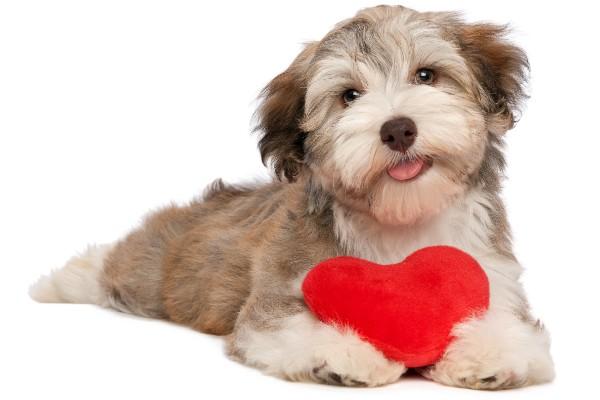 赤いハートを抱えた犬