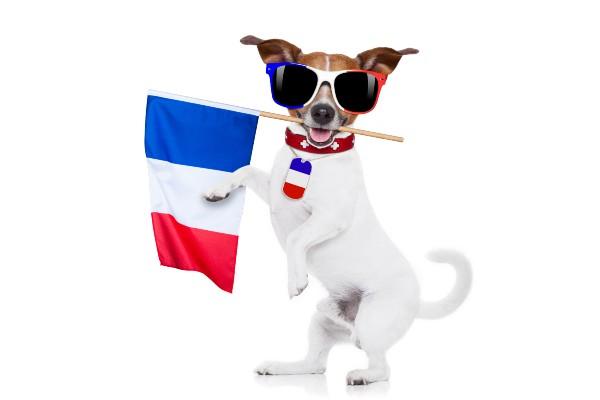 フランスの国旗を持った犬