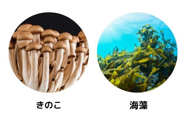 きのこ、海藻