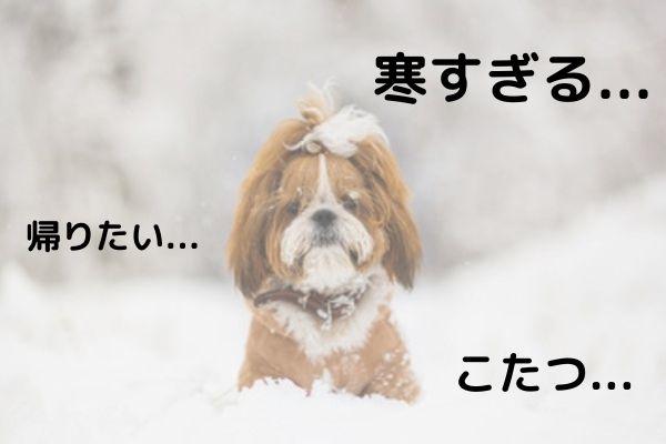 【獣医師監修】犬だって寒い!寒がりな愛犬におすすめの冬の寒さ対策紹介します!