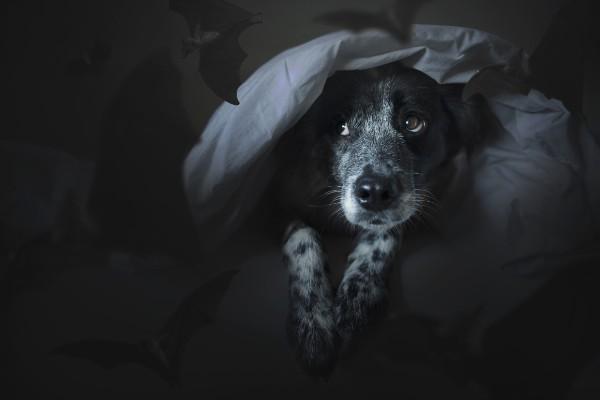 暗いところにいる犬
