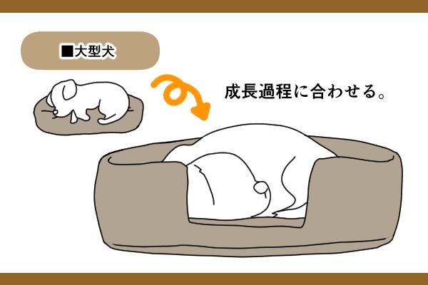 中型犬・大型犬は子犬と成犬でサイズが大きく変わる