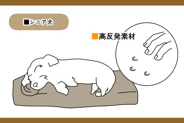 シニア犬は足が伸ばせるサイズを選ぶ