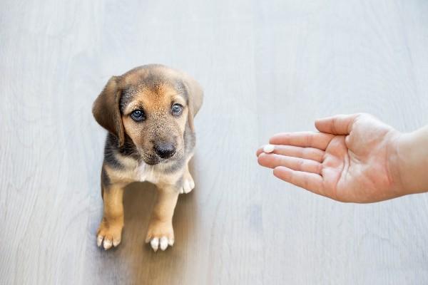 犬に薬を差し出す手