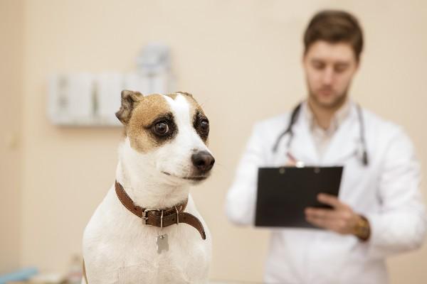 動物病院を怖がる犬