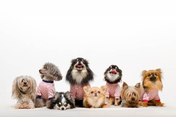 犬集合写真